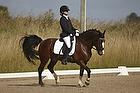 Slangerup-Lynge Rideklub - Holdmesterskab