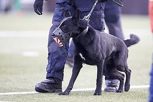Svensk politihund